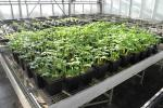 Compost and biochar use in greenhouse: application on potted vegetable crops mixed with potting soil/substrate